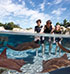 Discovery Cove: Ticket 1 dag